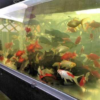 Рыба для пруда купить в магазине AlexFX